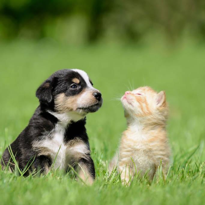Štene i maca